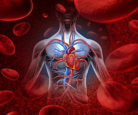 Anatomy of the human heart (Illustration: Colourbox)
